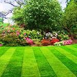 Подбираем качественный газон